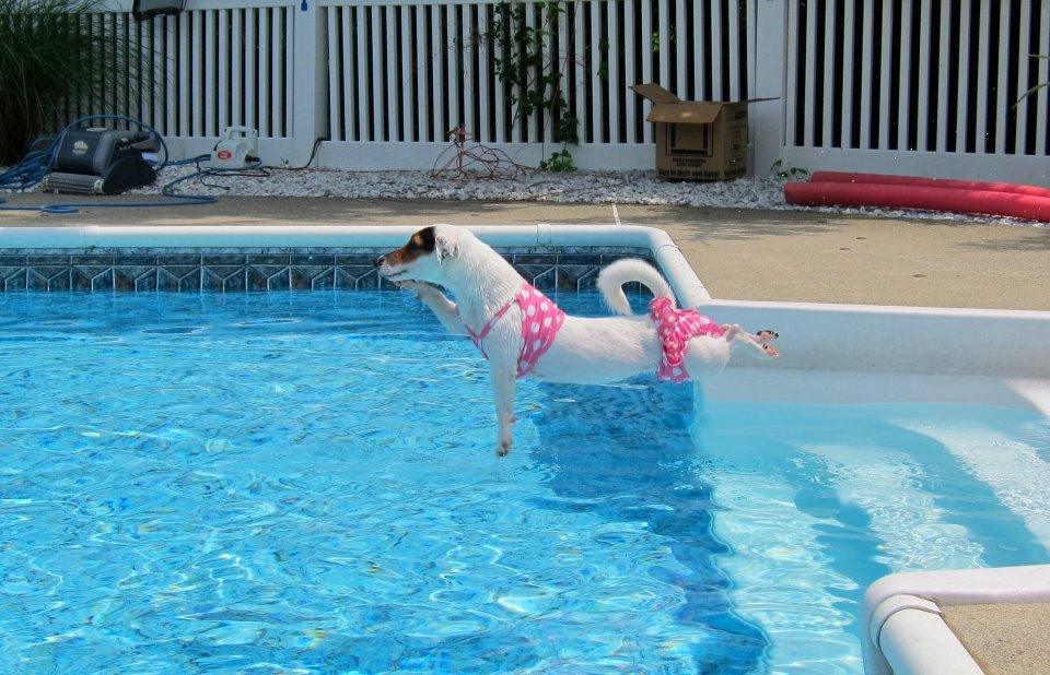 dog days of summer part ii pool safety really practical dog training